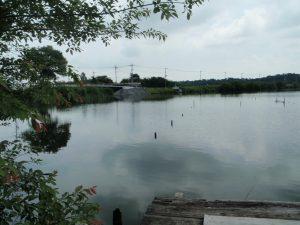 多々良沼の様子1