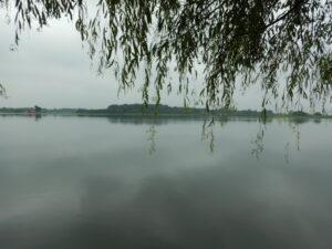 多々良沼の様子