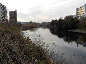 鶴見川の様子1