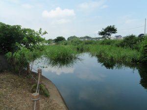 多々良沼の様子2